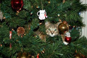 cat-in-trees-1