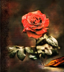 image of red rose with quill