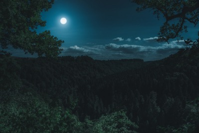 large forest at night with a full moon in the sky