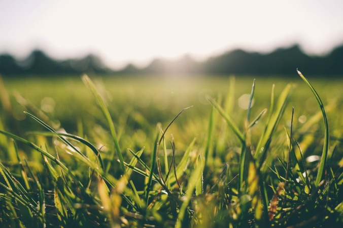 Sun rising over grass with dew