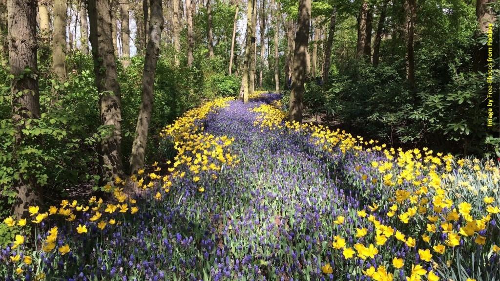 A flowered path