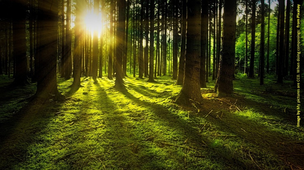 Forest clearing with sunlight