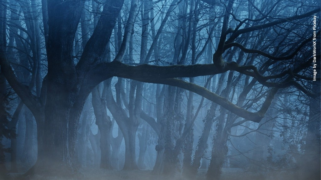 Tangled tree limbs