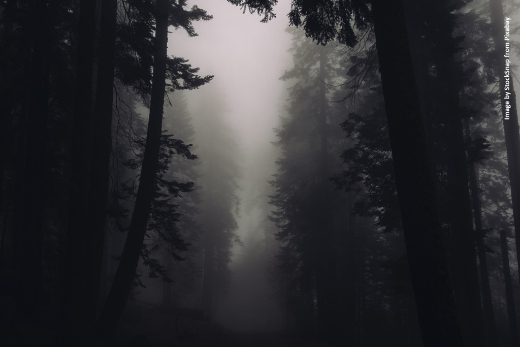 Dark, foggy, forest